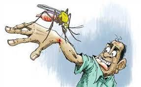 रहें सावधान : बुखार नहीं भी है तो भी हो सकता है डेंगू , टेस्ट अनिवार्य, डॉक्टरों की सलाह
