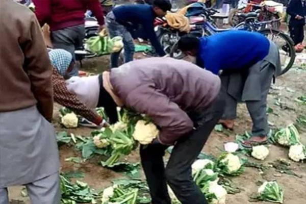 भाव नहीं मिला तो किसान ने सड़क पर फेंक दी 10 क्विंटल फूलगोभी, लोगों में मची लूटने की होड़