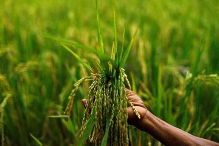 Budget 2021: MSP से डेढ़ गुना ज्यादा पैसा, जानिए सीतारमण के बजट में किसानों को और क्या मिला..