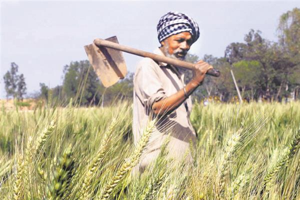 किसानों को बड़ी राहत, अब घर बैठे इस मोबाइल ऐप से किराए पर ले सकेंगे कृषि यंत्र