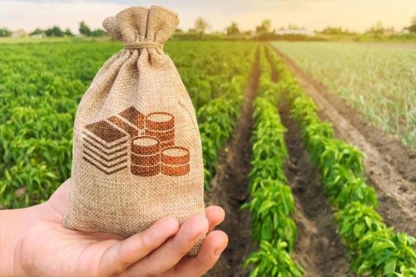 Read more about the article किसानों को केंद्र सरकार का तोहफा, MSP को लेकर किया बड़ा ऐलान